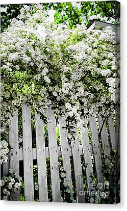 Garden With White Fence Canvas Print