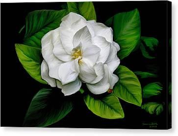 Gardenia Canvas Print by Sharon Beth