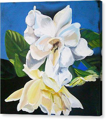 Gardenias Canvas Print by Shelley Overton