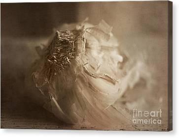 Garlic 1 Canvas Print by Elena Nosyreva