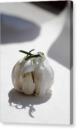 Garlic Clove Canvas Print