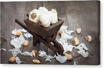 Garlic Cloves In A Miniature Wheelbarrow Canvas Print