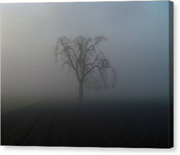 Garry Oak In Fog Canvas Print by Cheryl Hoyle
