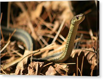 Garter View Canvas Print by Neal Eslinger