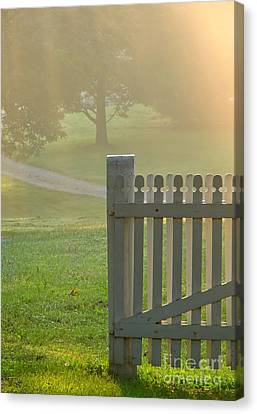 Gate In Morning Fog Canvas Print by Olivier Le Queinec