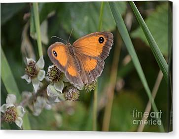 Canvas Print featuring the photograph Gatekeeper Butteryfly by Scott Lyons