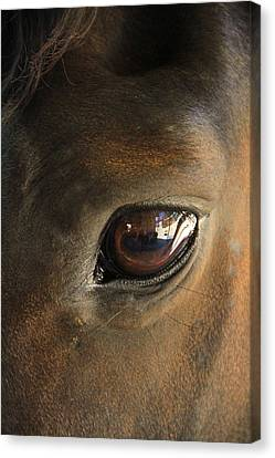 Gateway To A Horses Soul Canvas Print by Shoal Hollingsworth