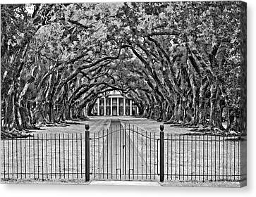 Gateway To The Old South Bw Canvas Print by Steve Harrington