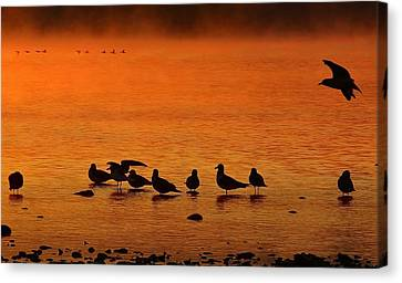 Gathering At Sunrise Canvas Print by Nick Kloepping