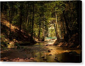 Canvas Print featuring the photograph Gathering At The Stream by Haren Images- Kriss Haren