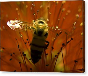 Gathering Nectar Canvas Print by Camille Lopez