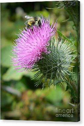 Gathering Pollen Canvas Print by Chalet Roome-Rigdon