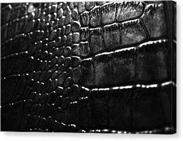 Gator Canvas Print by Anthony Cummigs