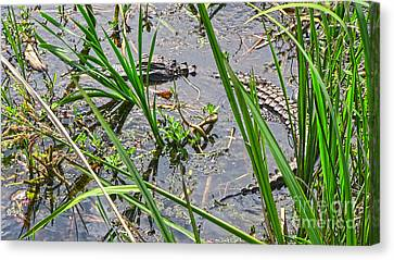 Gator Baby 2 Canvas Print by D Wallace