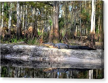 Gator Country Canvas Print by Bob Jackson