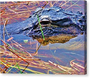 Gator Eye Canvas Print by Chuck  Hicks
