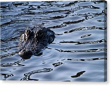 Mangrove Canvas Print - Gator On The Hunt by Andres Leon