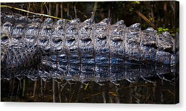 Gator Reflection Canvas Print by Adam Pender