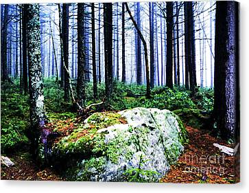 Gaudineer Scenic Area Canvas Print