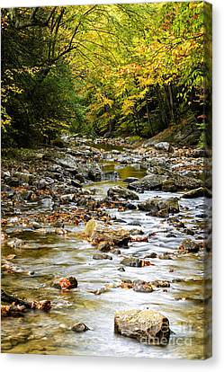 Gauley River Headwaters Canvas Print by Thomas R Fletcher