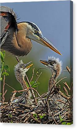 Great Blue Heron Twins Canvas Print