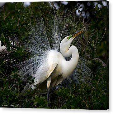 Canvas Print featuring the photograph Geat Egret Mating Dance I by Kathy Ponce