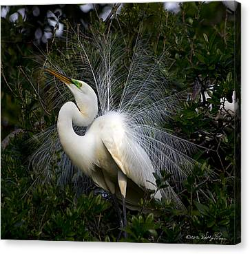Canvas Print featuring the photograph Geat Egret Mating Dance II by Kathy Ponce