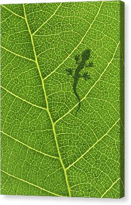 Gecko Canvas Print by Aged Pixel