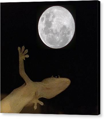 Gecko Moon Canvas Print by Cameron Bentley