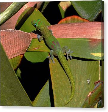 Gecko Canvas Print by Pamela Walton