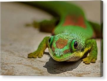 Gecko Portrait Canvas Print by Linda Villers