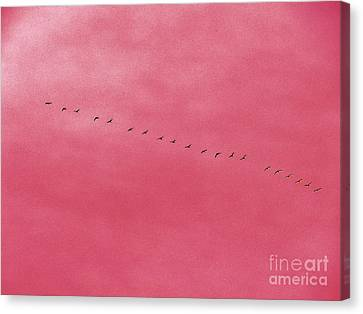 Geese 3 Canvas Print by Judy Via-Wolff