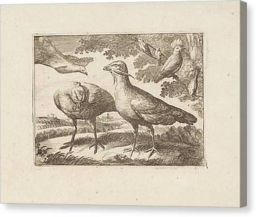 Geese And A Cockatoo, Francis Barlow, Pieter Schenk Canvas Print