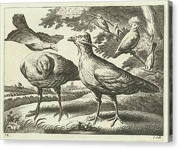Geese And A Cockatoo, Pieter Van Lisebetten Canvas Print