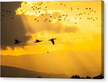Geese At Sunset-2 Canvas Print by Brian Williamson