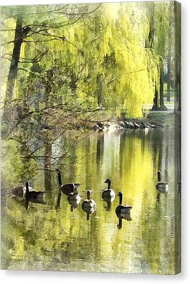 Weeping Willow Canvas Print - Geese By Willow by Susan Savad