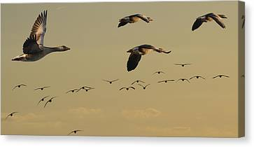Geese Charter Canvas Print by Michael Mogensen
