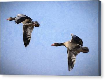 Geese Flying Canvas Print by Tommytechno Sweden
