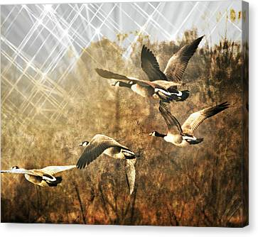 Canvas Print - Geese In Flight 2 by Marty Koch