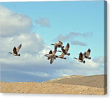Canvas Print featuring the photograph Geese In Flight by Lula Adams