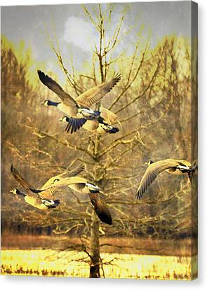 Canvas Print - Geese In Flight by Marty Koch