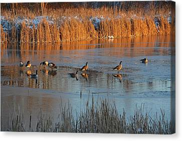 Geese In Wetlands Canvas Print