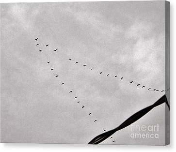 Geese Canvas Print by Judy Via-Wolff
