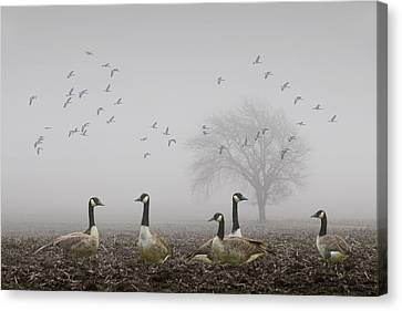 Geese Canvas Print - Geese On A Foggy Morning by Randall Nyhof