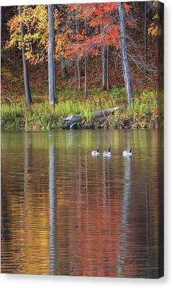 Geese On Beebe Lake Canvas Print by Michele Steffey