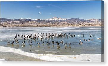 Geese On Ice  Canvas Print by James BO  Insogna