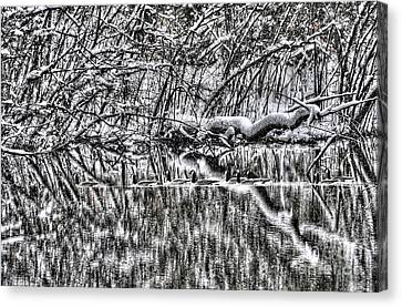 Geese On Pond Black And Wihite Canvas Print by Dan Friend