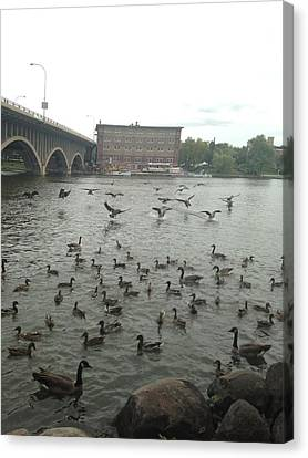 Geese Swooping Down Canvas Print by Natalee Parochka