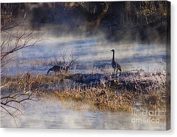 Geese Taking A Break Canvas Print by Jennifer White