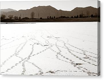 Geese Tracks In Winter Canvas Print